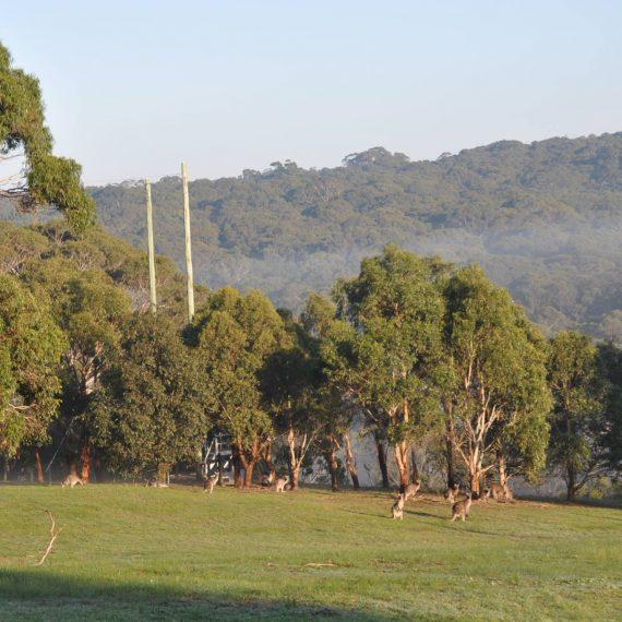 misty-camp-morning2