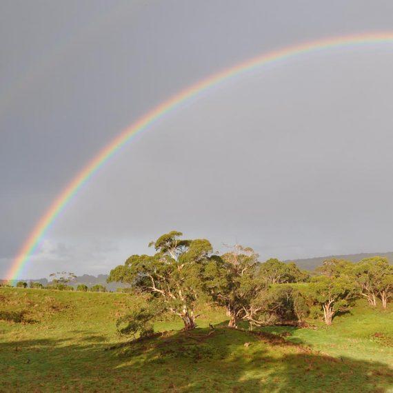property-rainbow